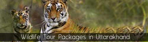 Wild life tour packages in Uttarakhand